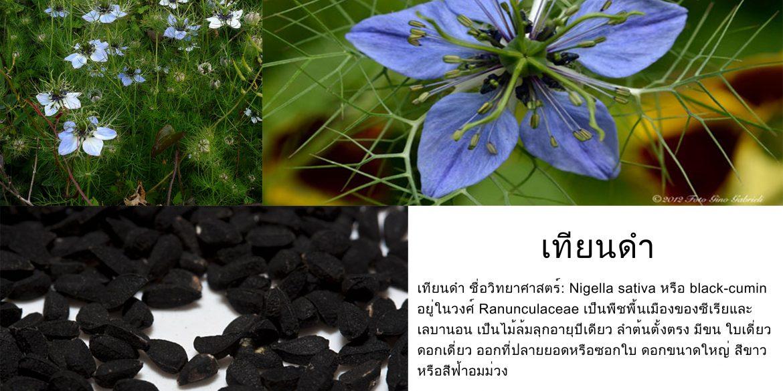 น้ำมันเทียนดำ สรรพคุณ ประโยชน์หลายอย่าง มีผลงานวิจัย