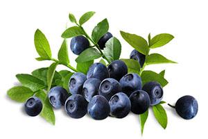 Bilberry extract อาหารเสริมบำรุงสายตา