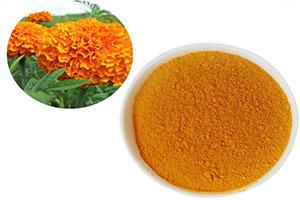 Marigold Flower Extract สารสกัดจากดาวเรือง